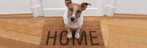 Home insurance and dogs